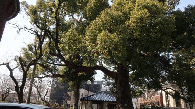 武蔵境 くすの樹 閉店