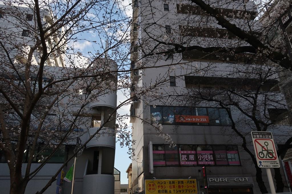 武蔵境 桜 花見