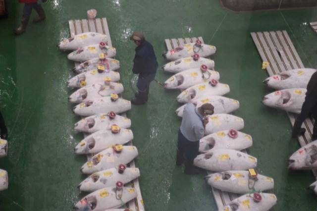 豊洲市場 マグロ競り 抽選 時間 見学 観光